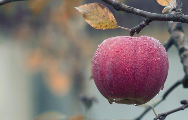 Rødt æble i regn